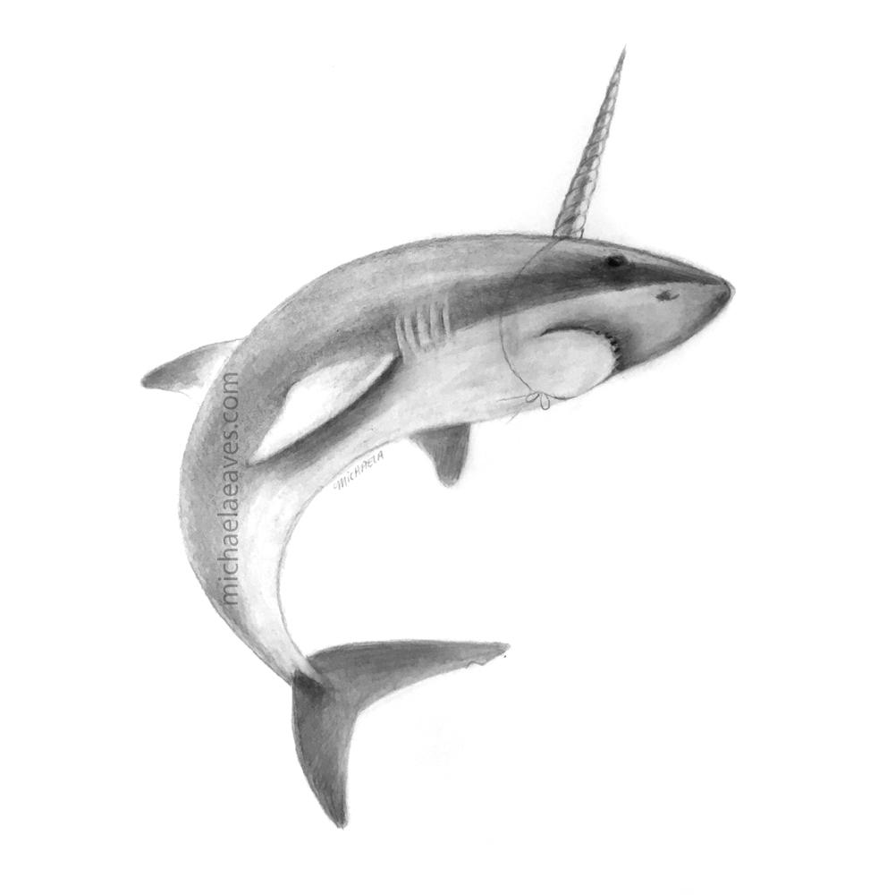 SharkNarwhalNotScan_72.jpg