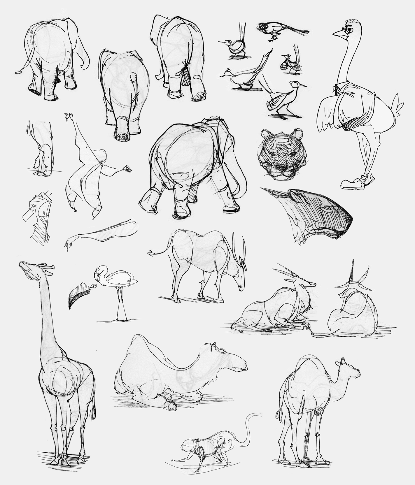 sketches_animals.png