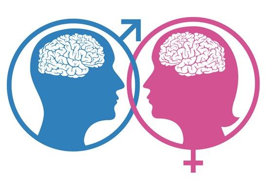 female-male-brain-differences.jpg