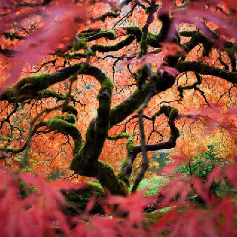 tree roots4.jpg