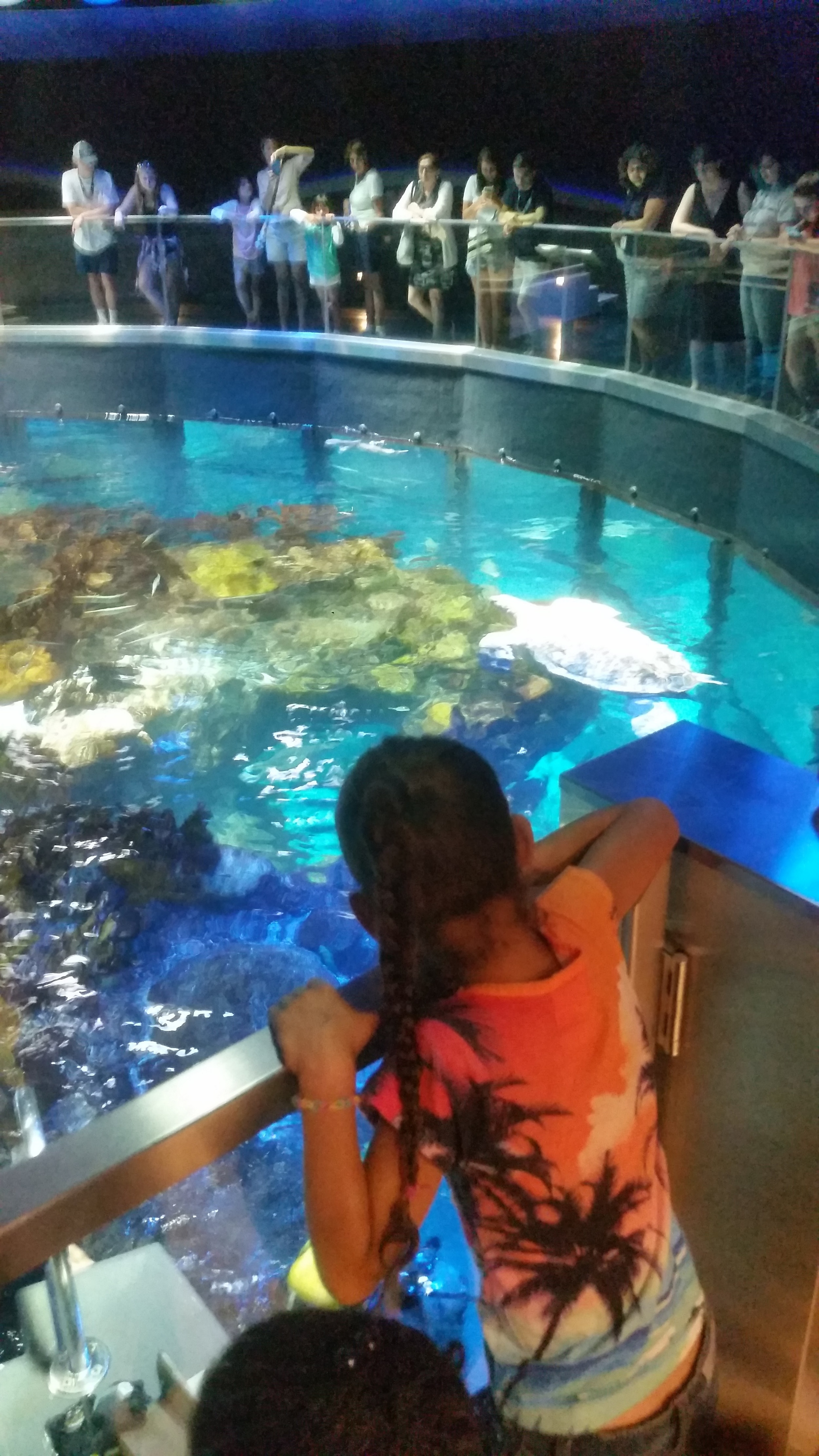 Students learn about marine life during a field trip to the New England Aquarium
