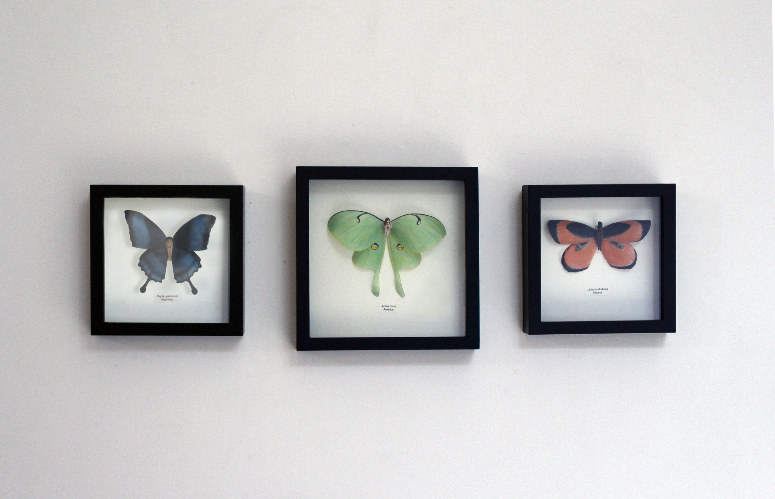 Entomology of a Developing Feminist
