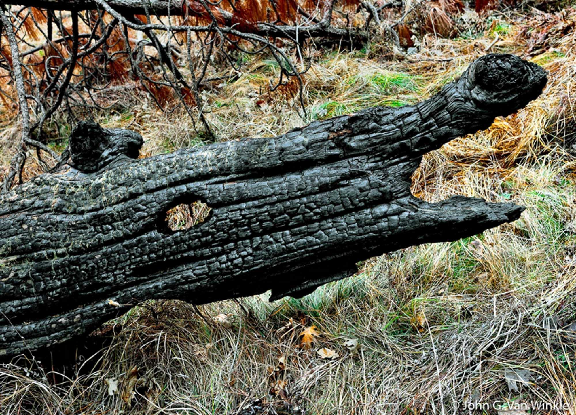 Burned Log, El Capitan Meadow, Yosemite National Park, California