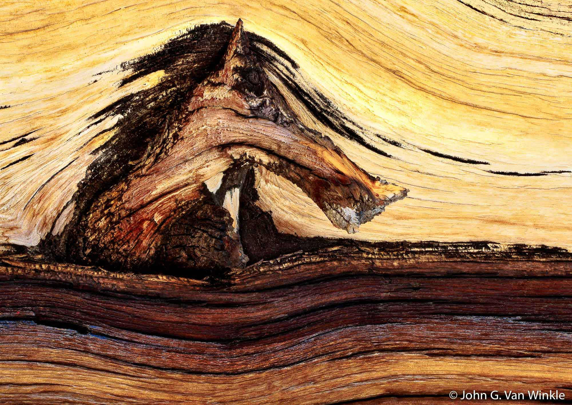 Bark Design on Bristlecone Pine, White Mountains, California