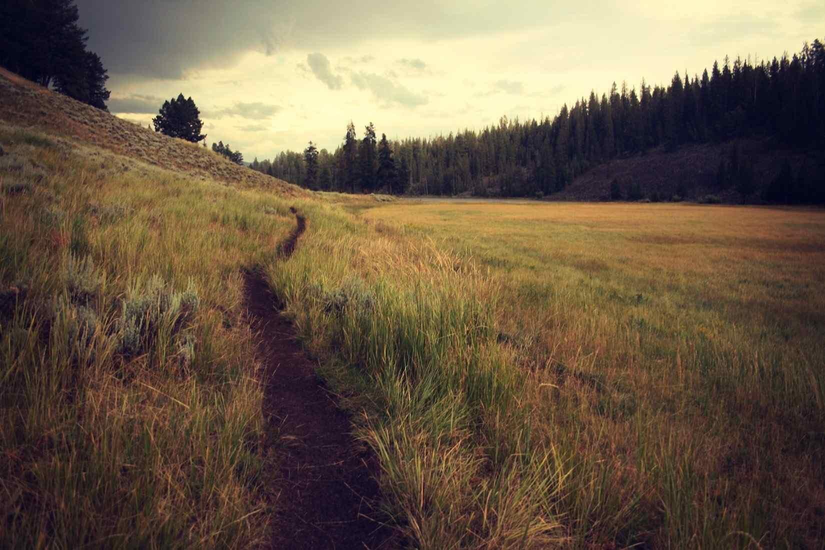 Mountain Path, grass, trees