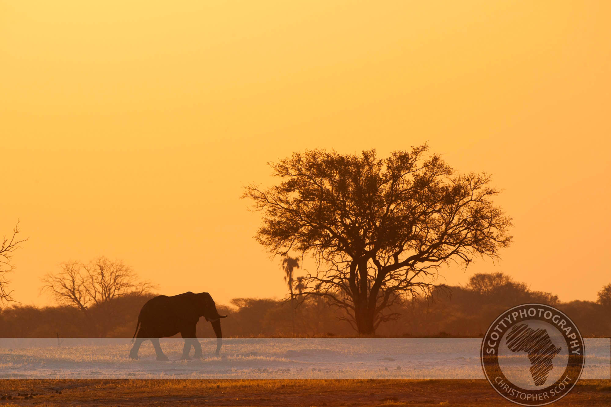 Elephant-4016-2 (1).jpg