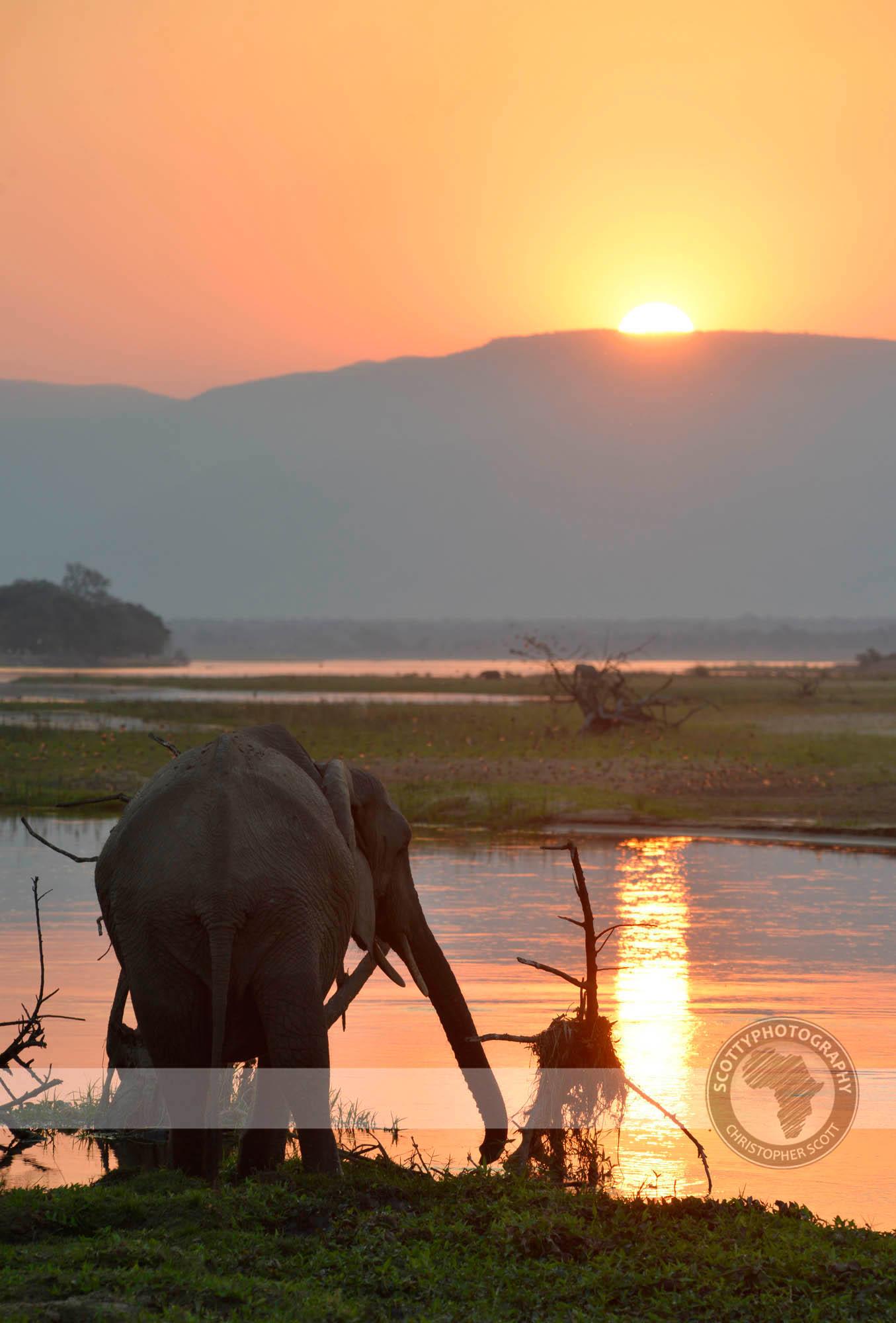 Elephant3189.jpg