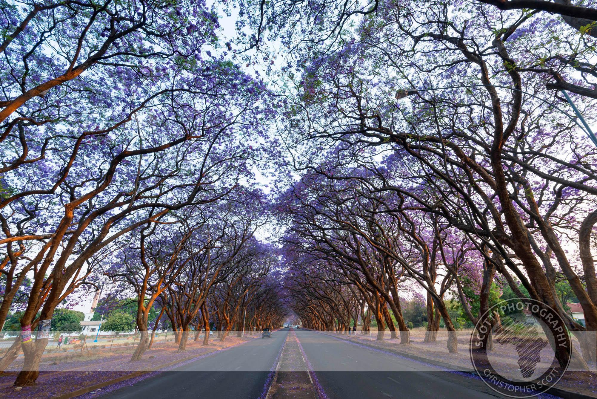 Harare-1313.jpg