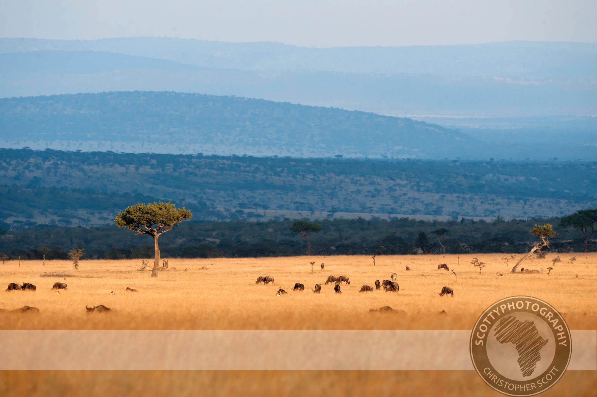 Wildebeest0207.jpg