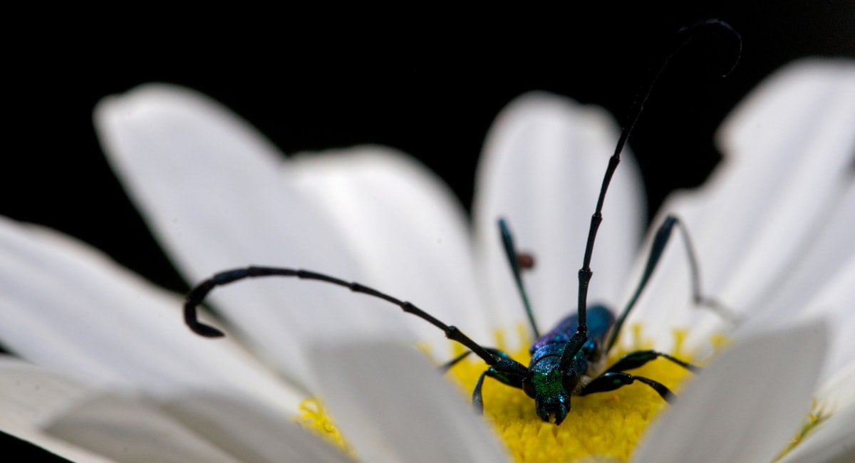 Chris Scott Photography Macro Bug.jpg