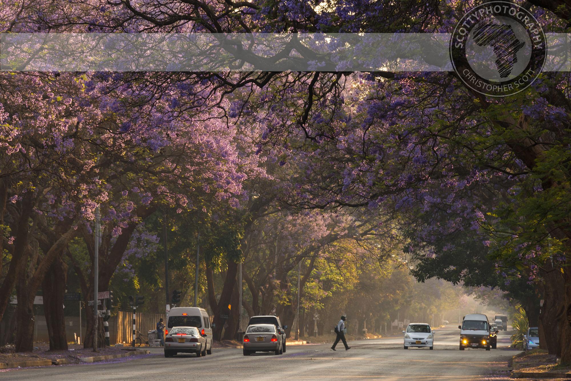 Harare-1447 copy.jpg