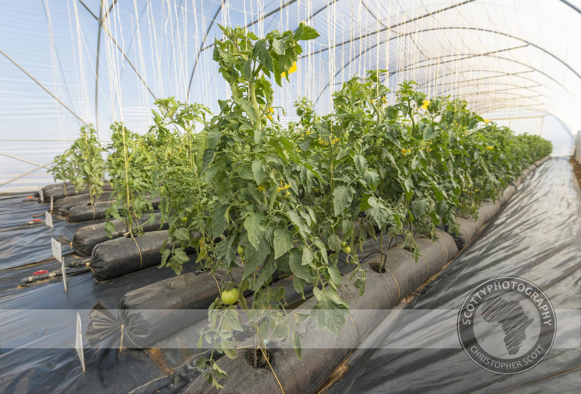 Prime Seeds (2).jpg