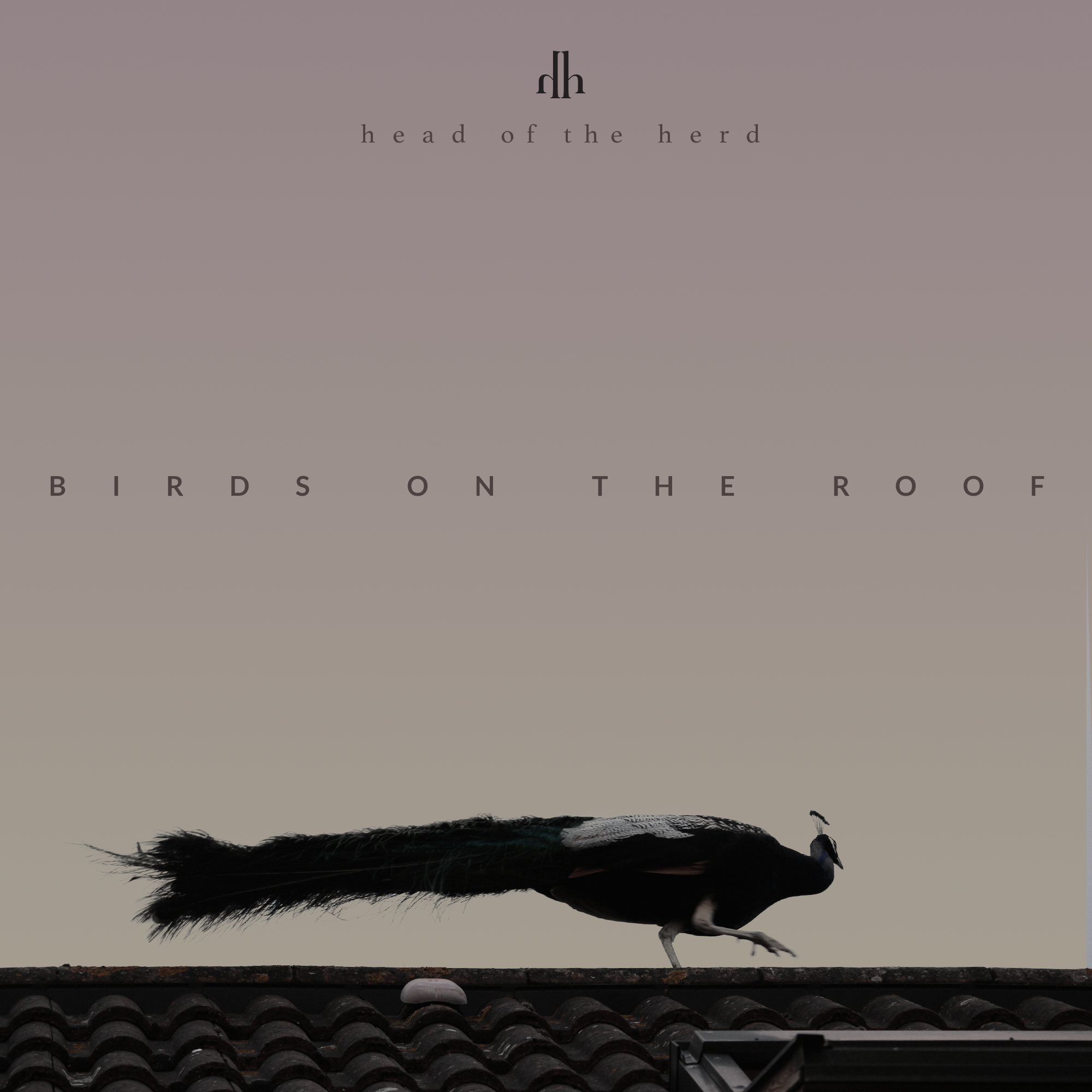 "<p><strong>Head of the Herd</strong>Birds On The Roof <a href=""https:/itunes.apple.com/ca/album/birds-on-the-roof-deluxe/id1024184864"">Listen →</a></p>"