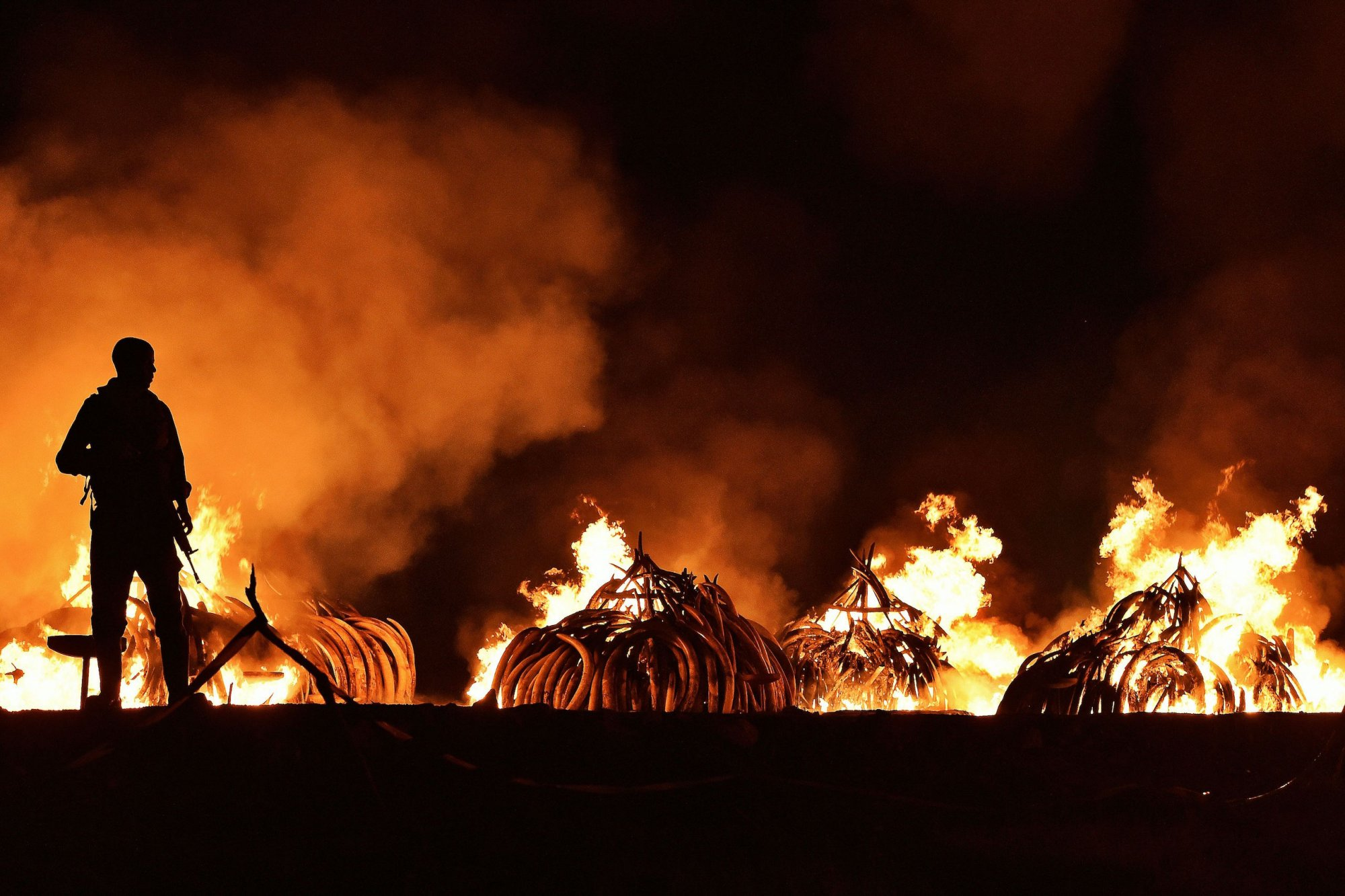ivory burning.jpg