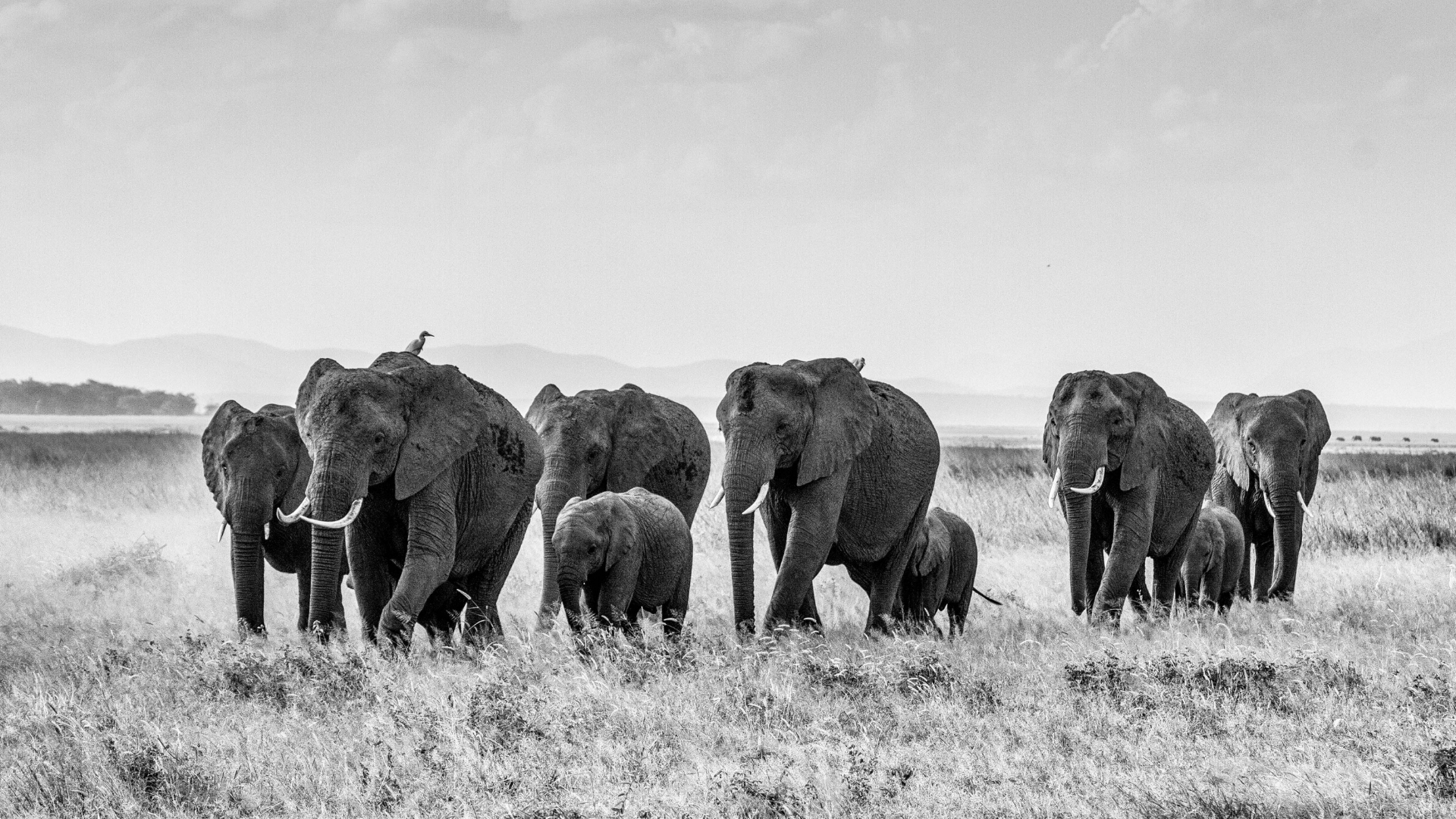 Elephants 2018.jpg