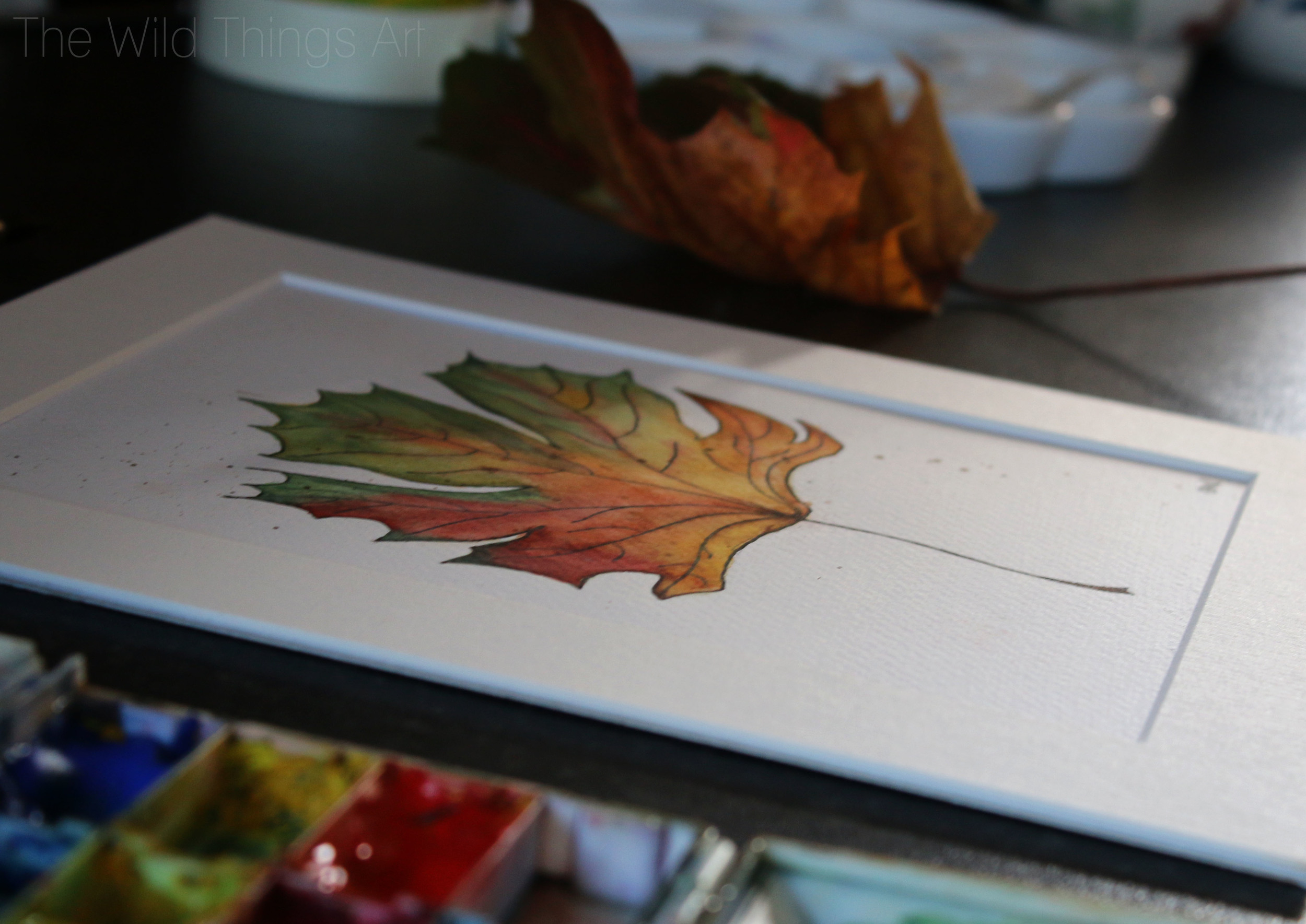 Autumn leaf.jpg