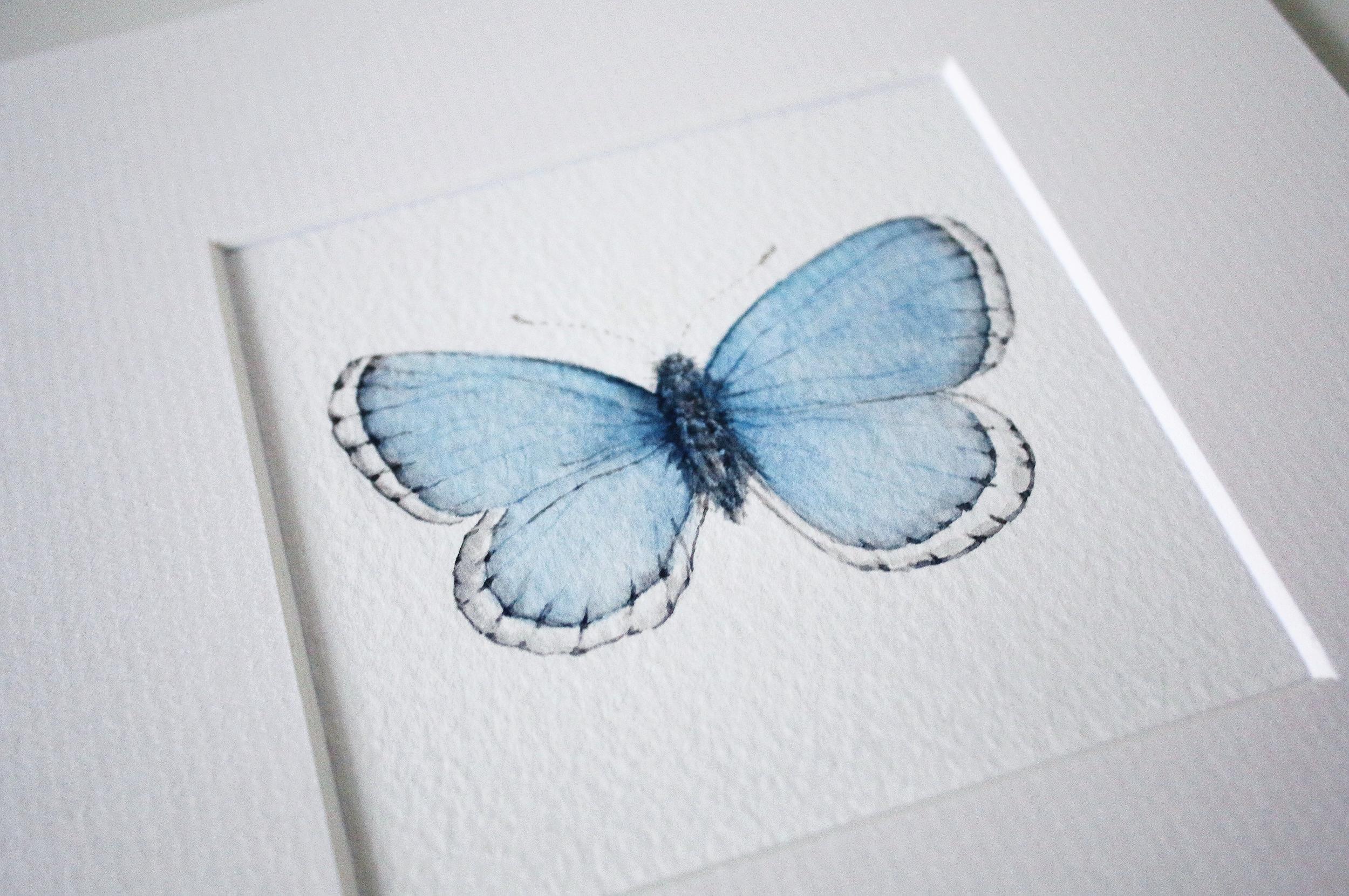 blue butterfly 3.jpg