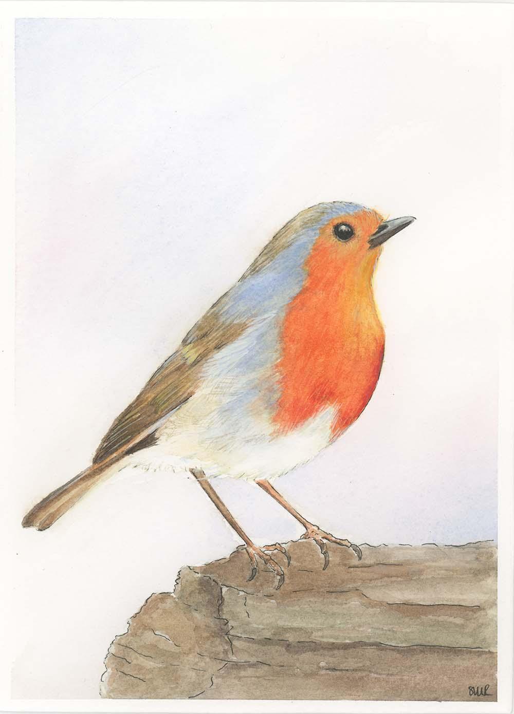 Robin 2 web.jpg