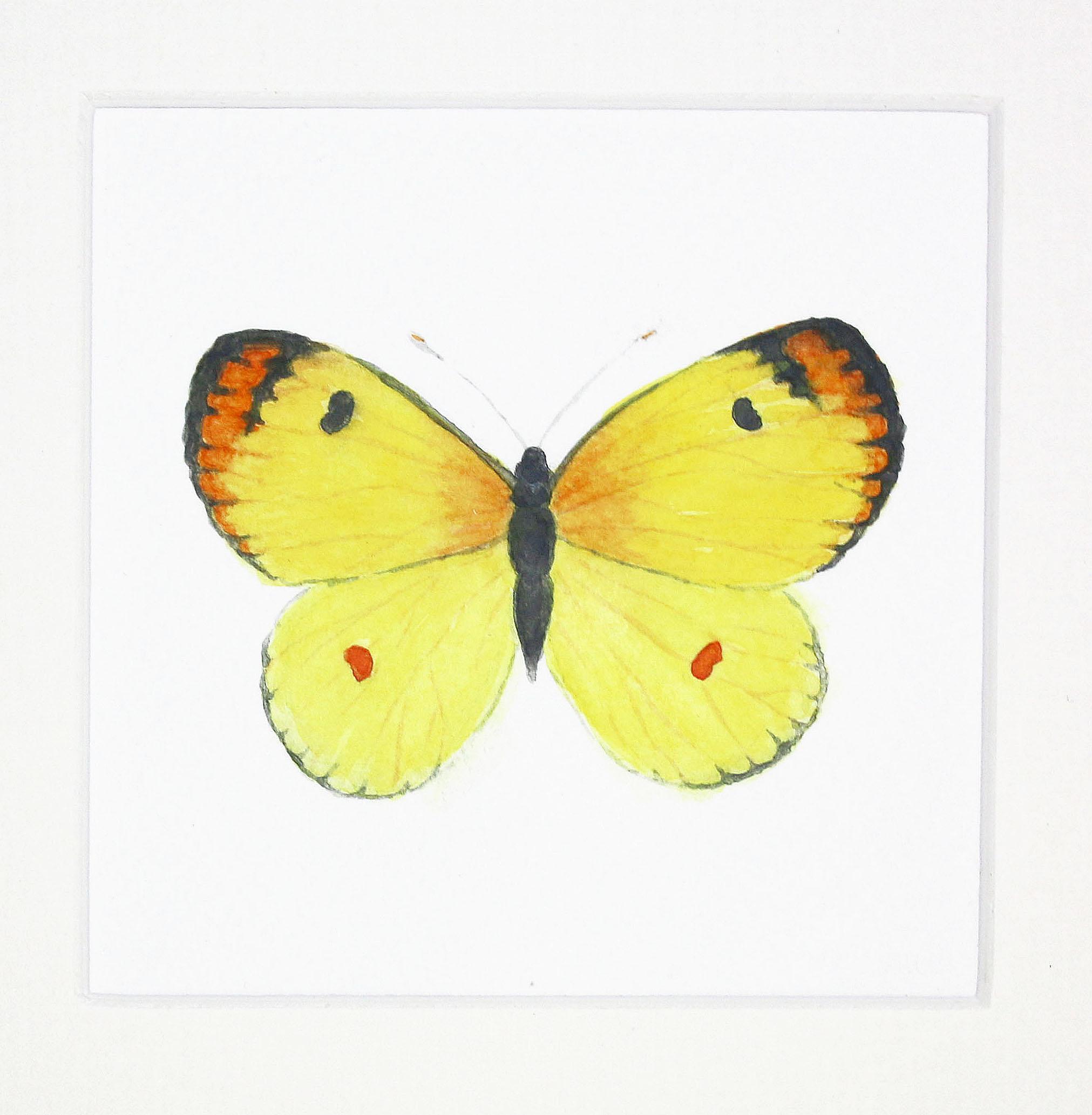 butterfly yellow 1 copy.jpg