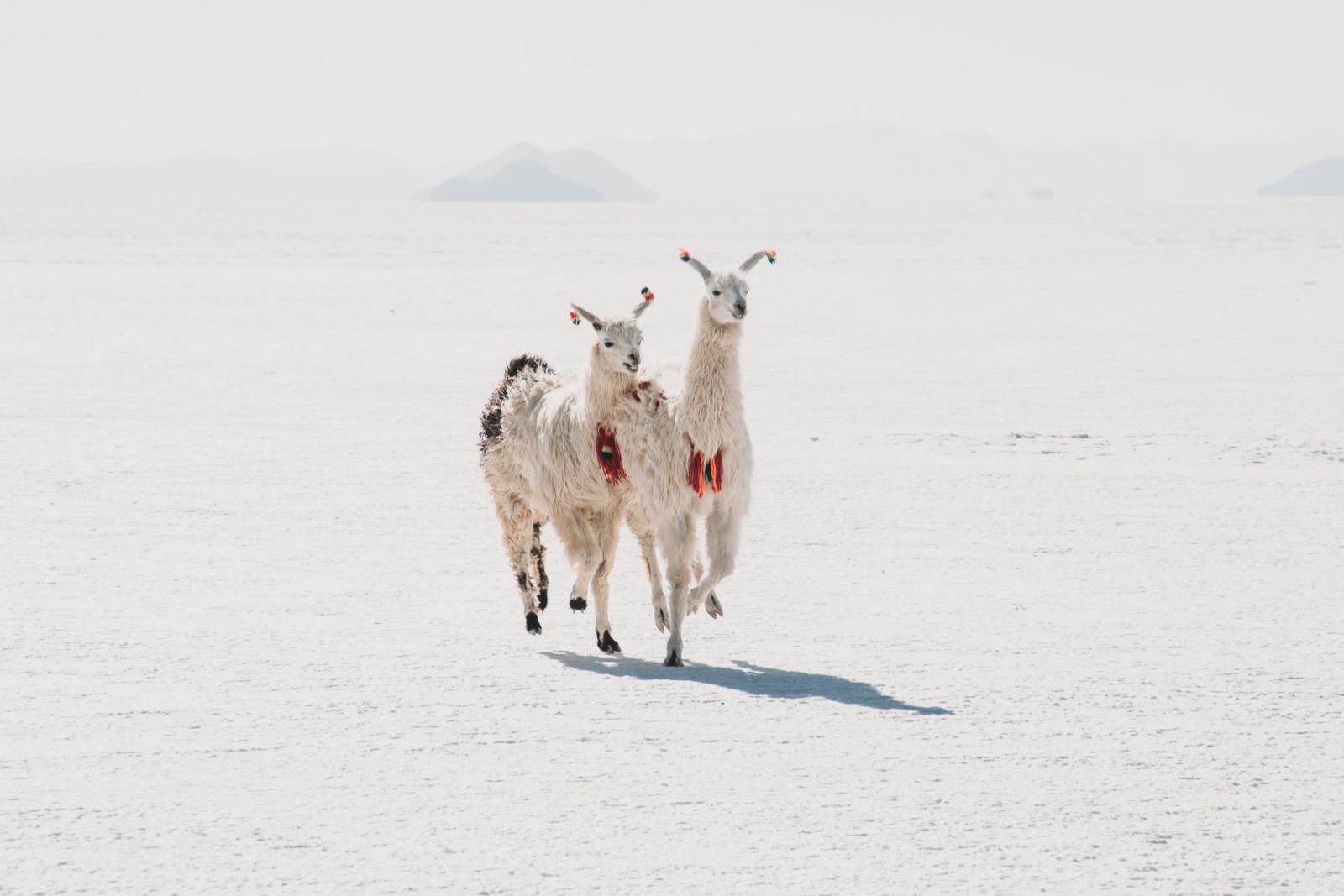 Evabloem-Salar-de-Uyuni_Bolivia-0057.jpg