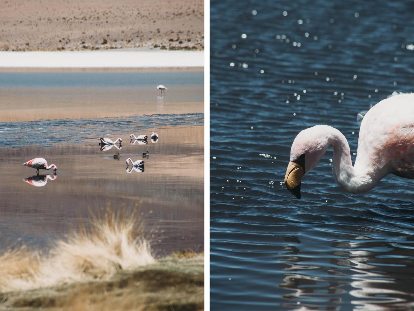 Evabloem-Salar-de-Uyuni_Bolivia-0086-2.jpg