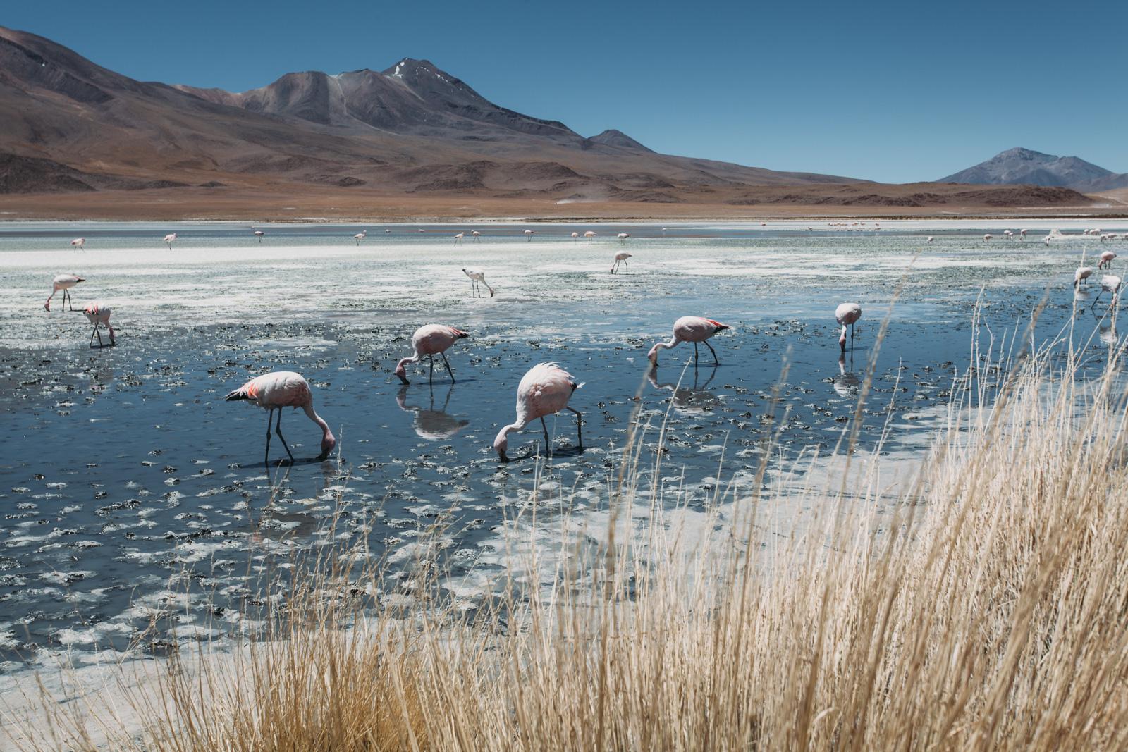 Evabloem-Salar-de-Uyuni_Bolivia-0122.jpg