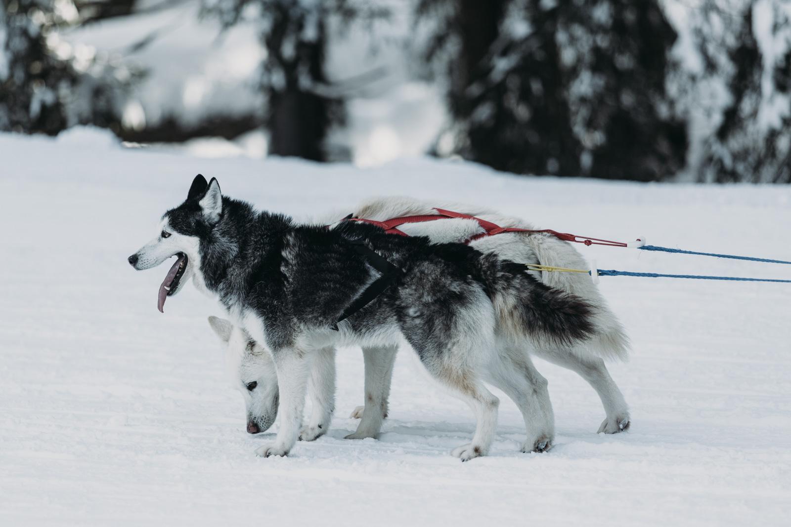 Evabloem_travel_wintersports_le-grande-massif-0029.jpg