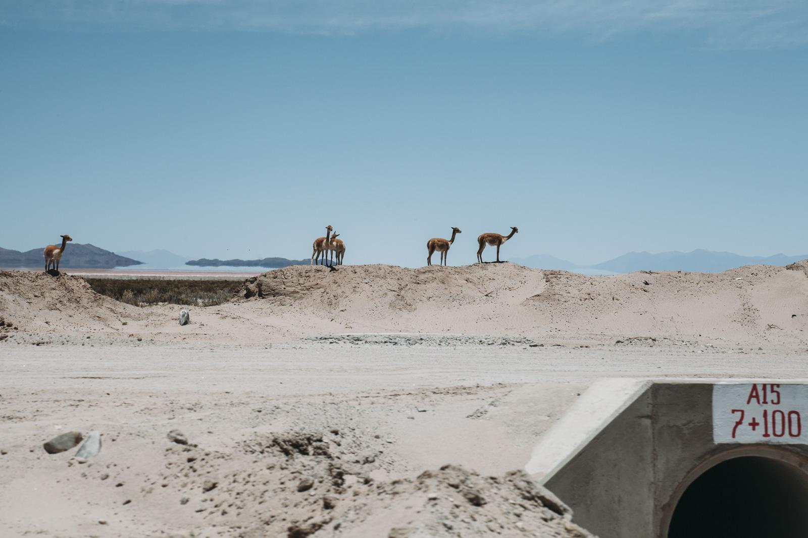 Evabloem-Salar-de-Uyuni_Bolivia-0022.jpg