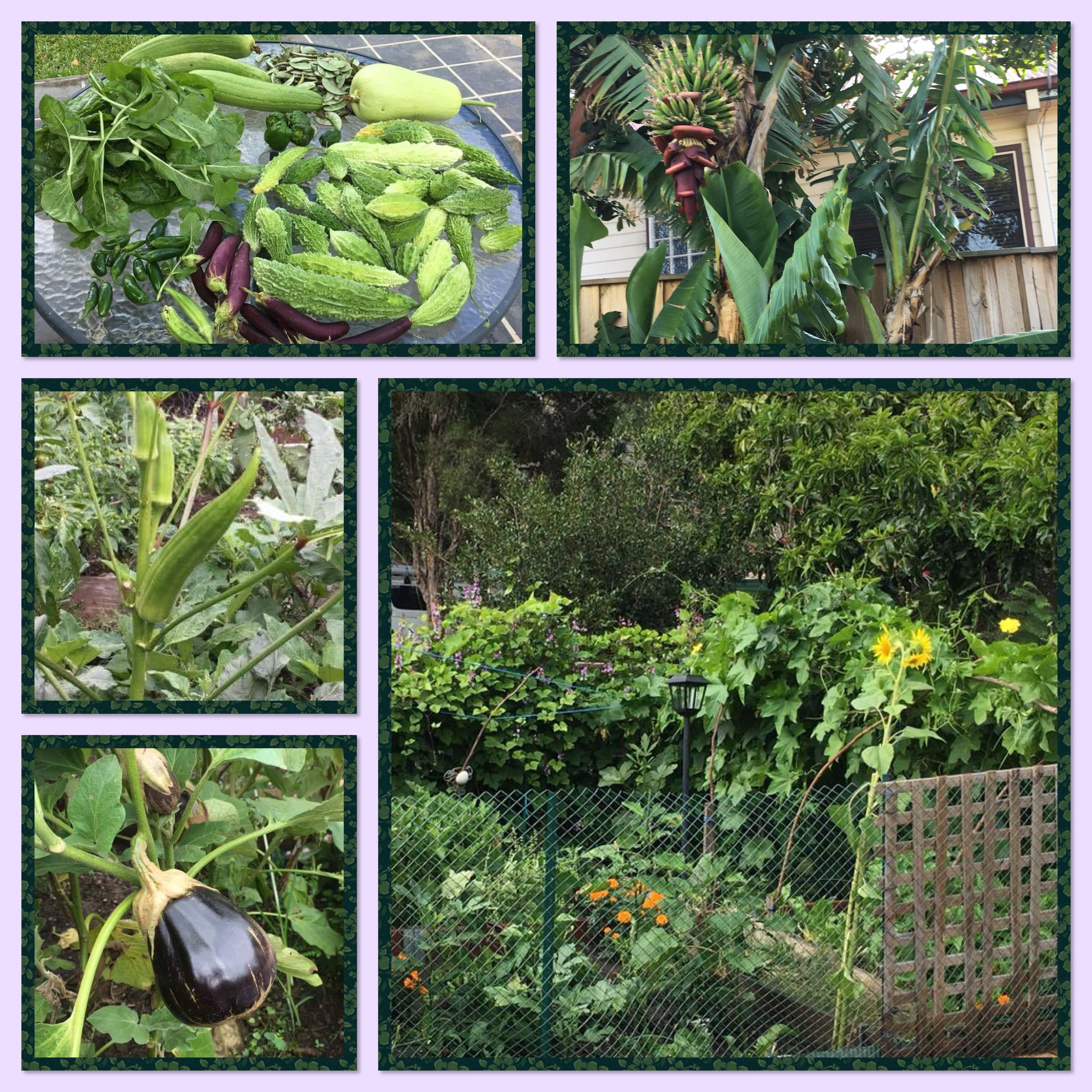 Permaculture garden and harvest at the Singh household      Source Priyanka Singh.JPG