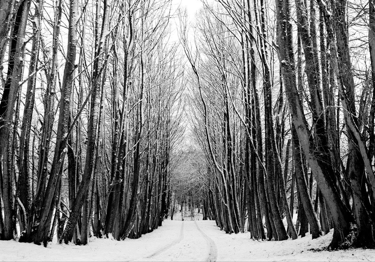 2_Winterbomen.jpg