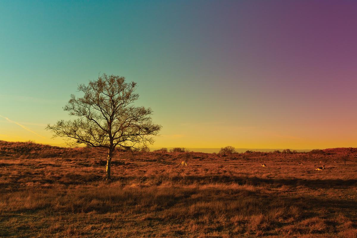 8_Kleurenboom.jpg