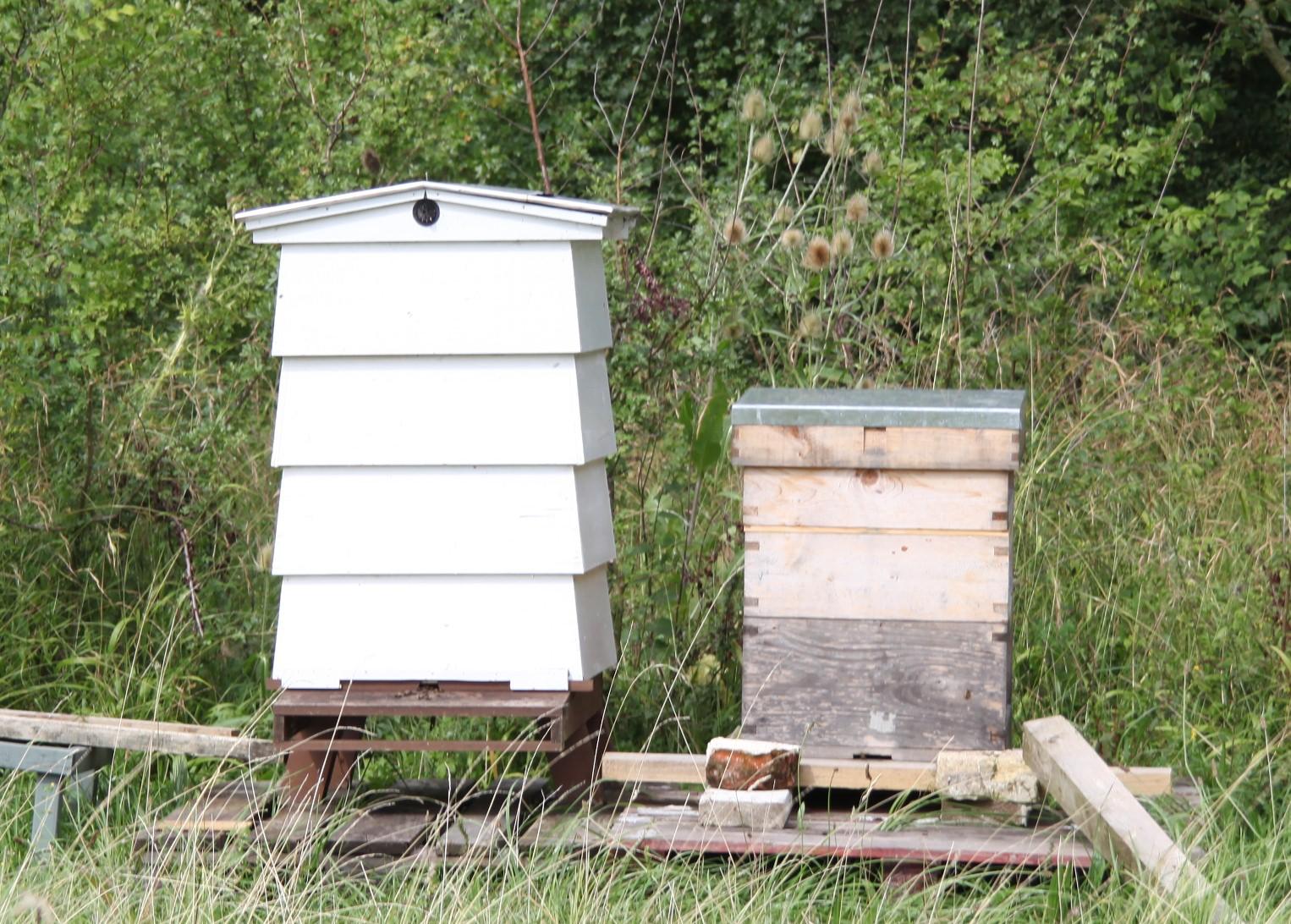 bee_hives_zoom.JPG