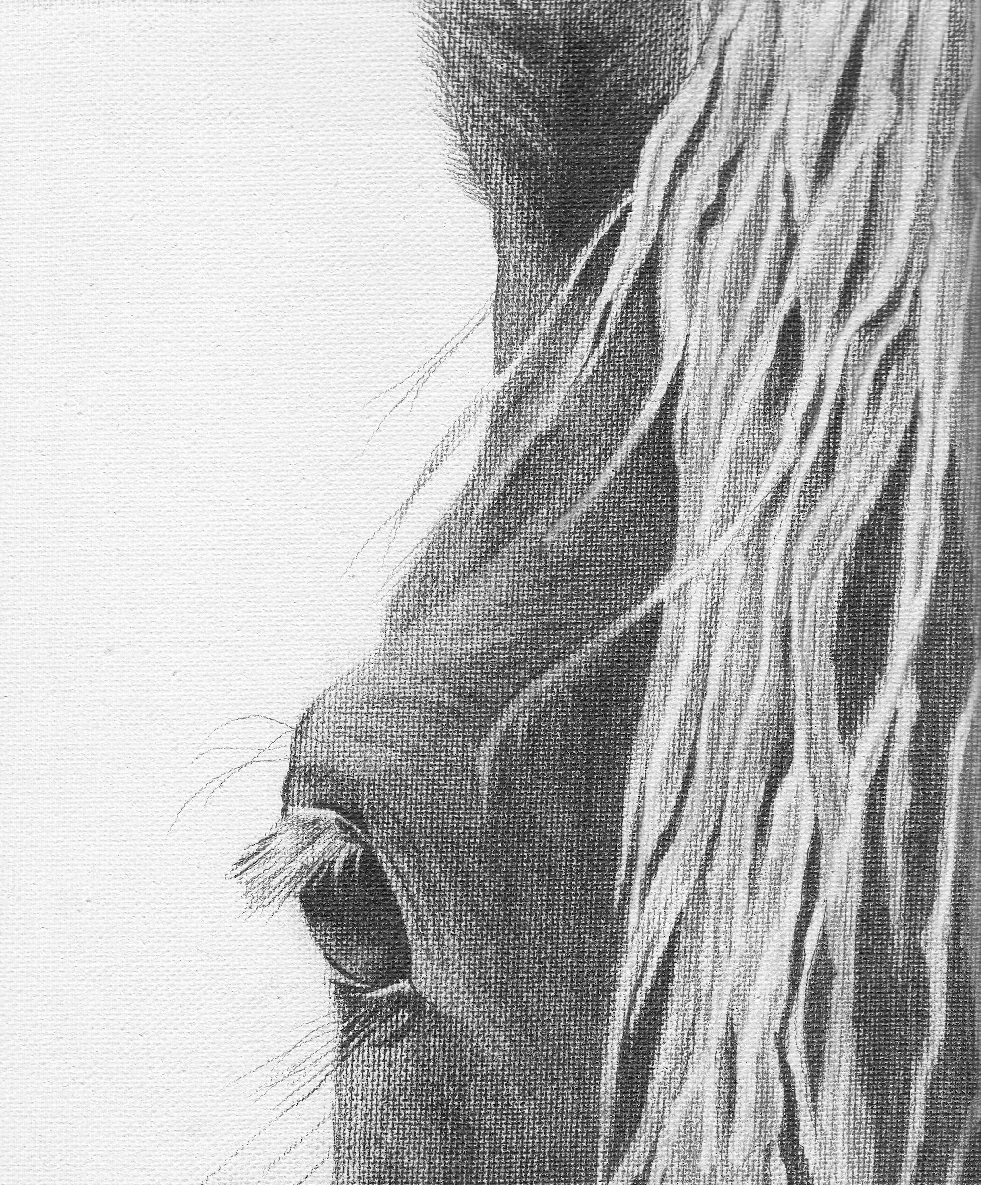 Asto Horse3.jpeg