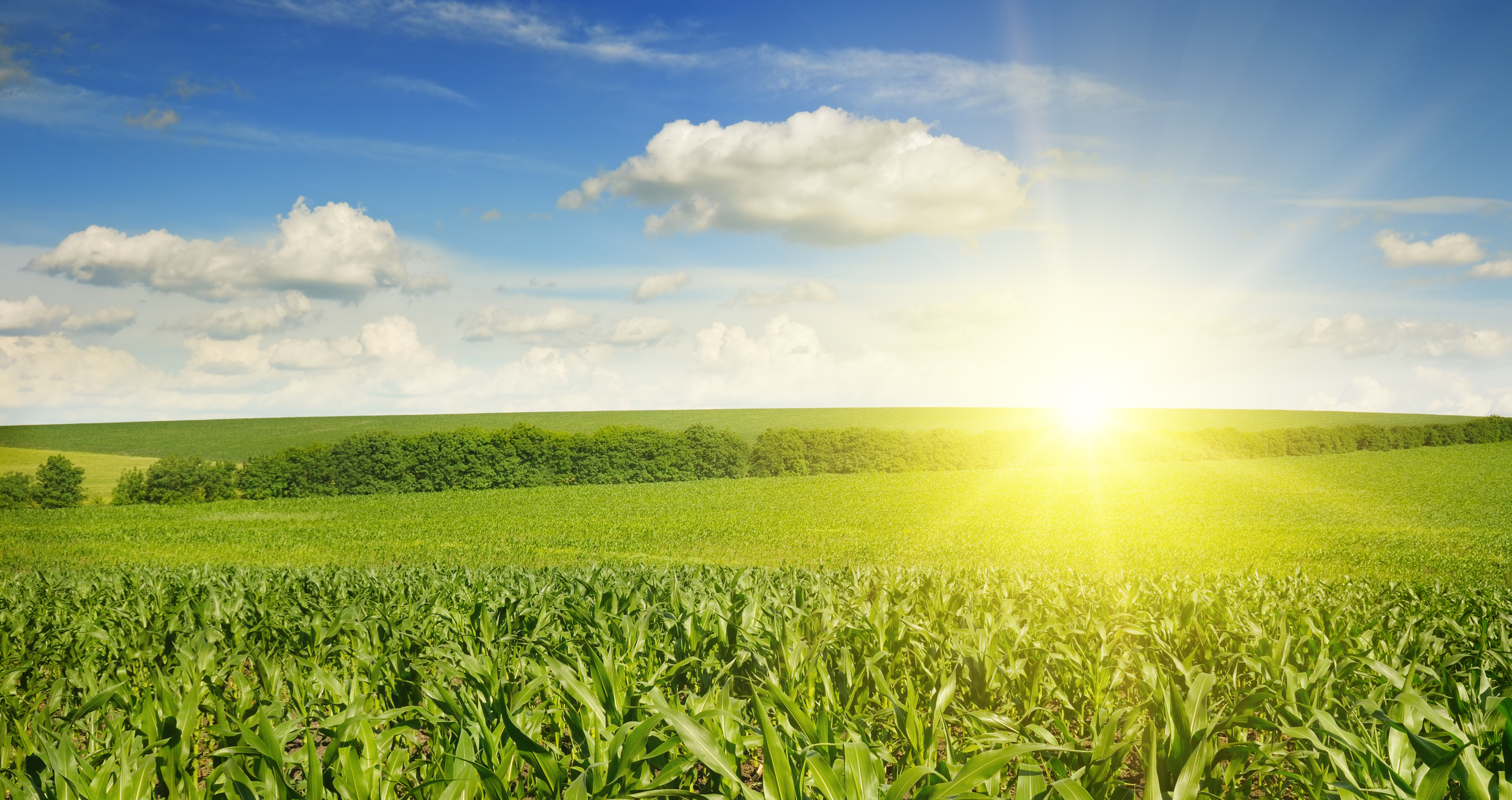 stock-photo-beautiful-sunset-on-corn-field-189927647.jpg