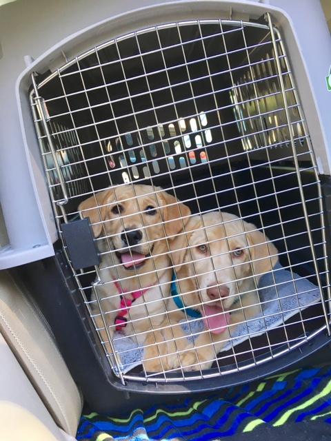 Daisy and Duke