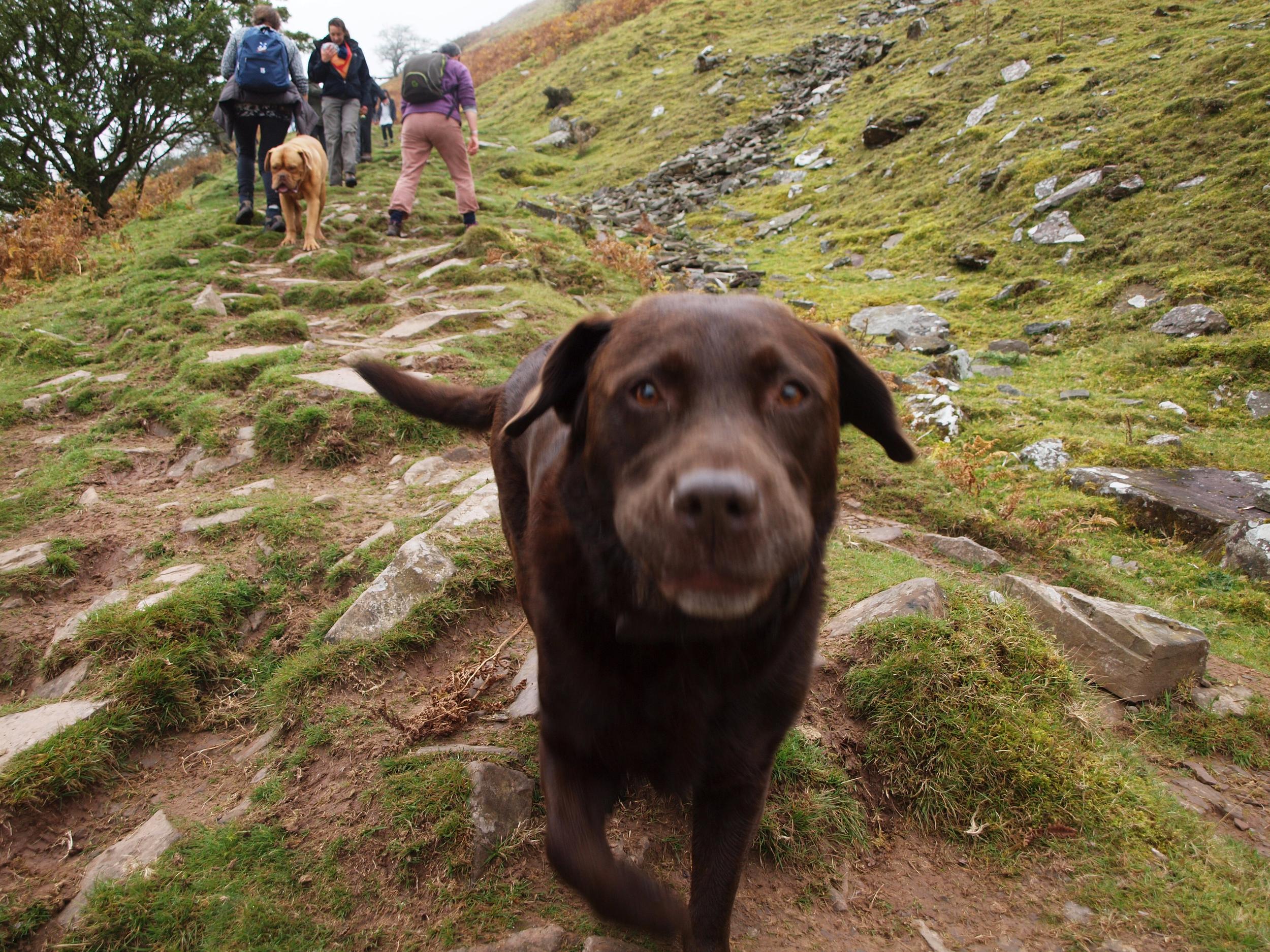Dog rushing towards the camera