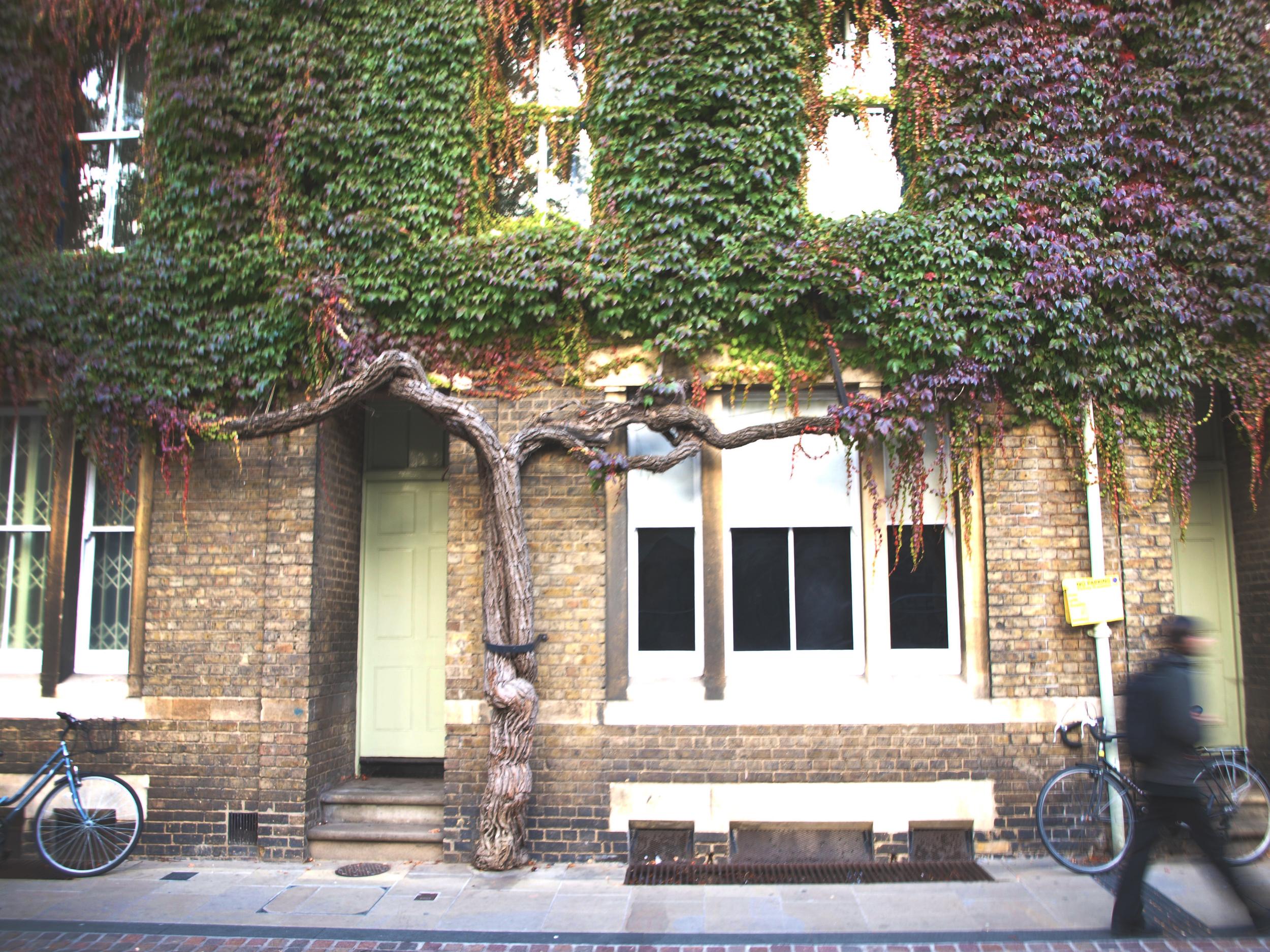 verdant facade