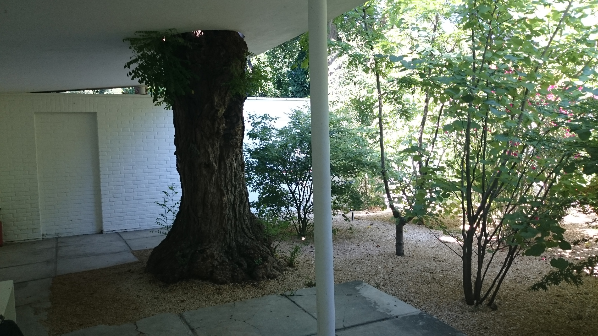 Tree penetration