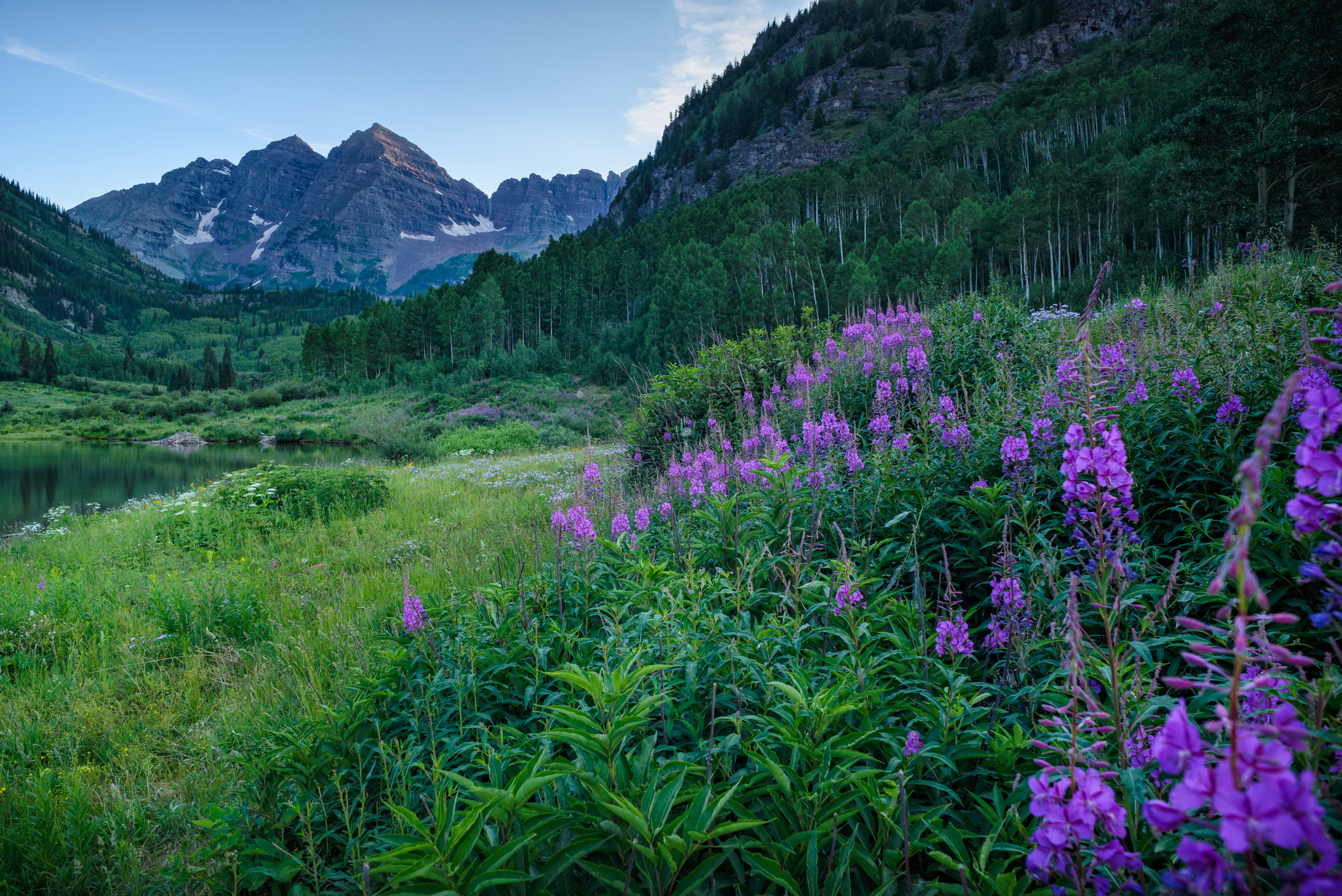 Nature - Nature is vital to the physical and mental health of all people and is one of life's great joys. We support legal defense funds and environmental protection organizations.