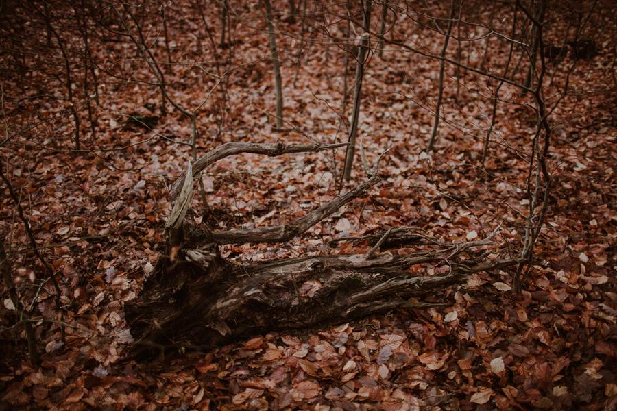 sesja-slubna-w-lesie-fotograf-slubny-poznan-002.jpg