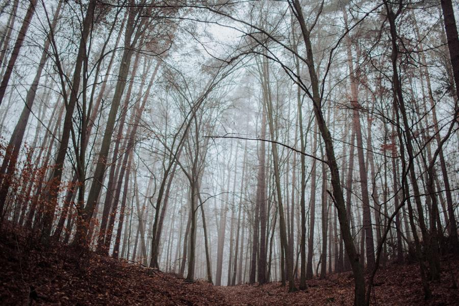 sesja-slubna-w-lesie-fotograf-slubny-poznan-012.jpg