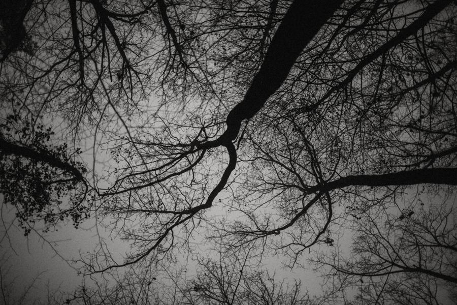 sesja-slubna-w-lesie-fotograf-slubny-poznan-024.jpg