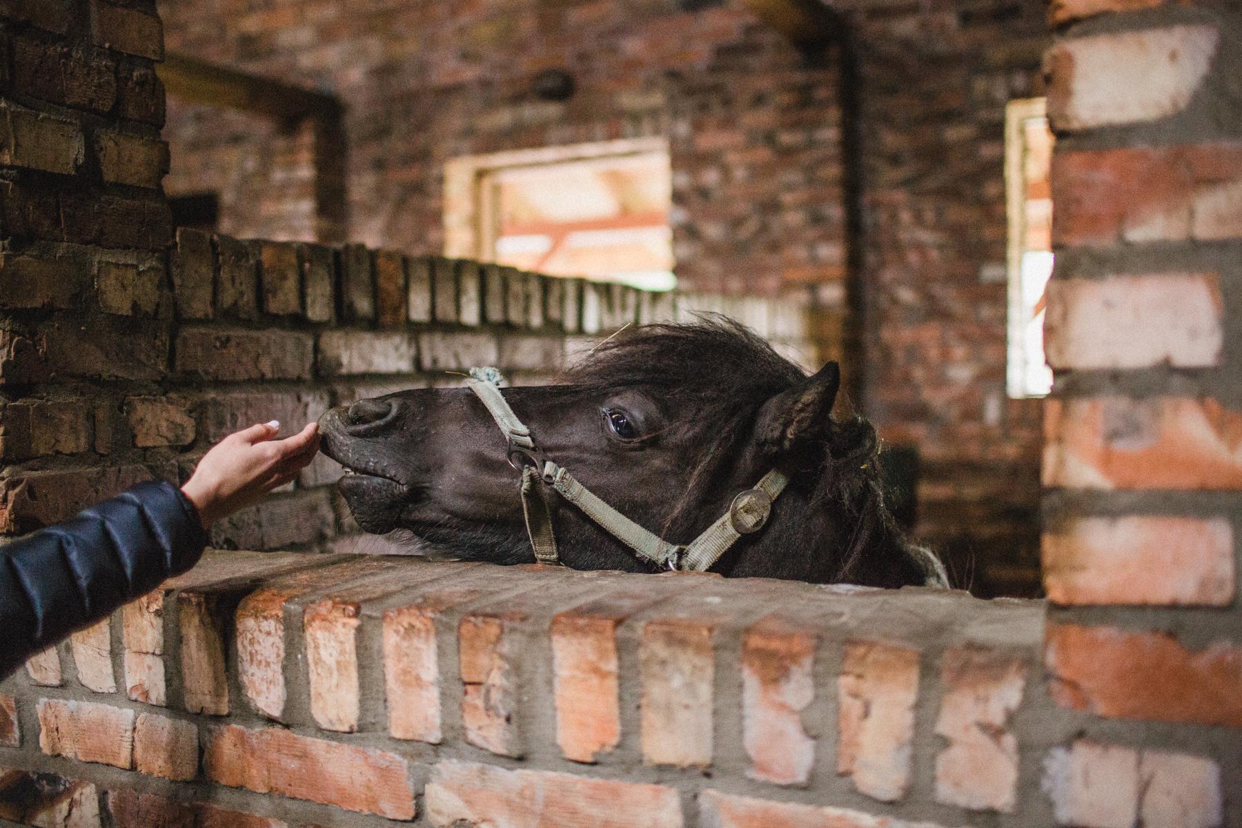 presety kamili toffee pie A-19.jpg
