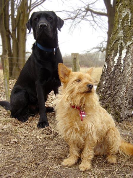 Labrador Pepper mit Feivel