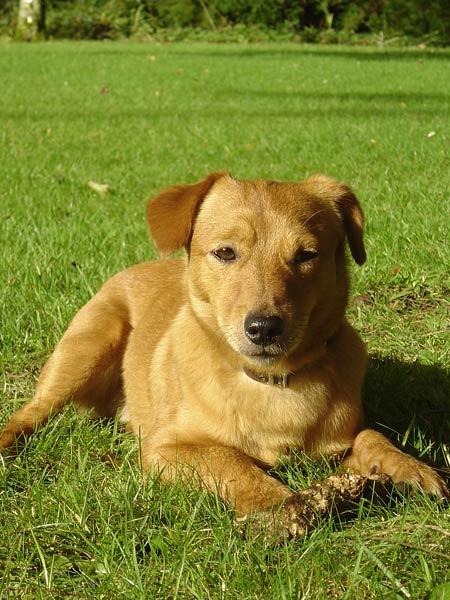 Terrier-Dackel-Mischling-Toffee.jpg