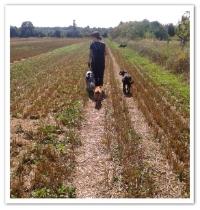 Dog Walking Frohnau.jpg