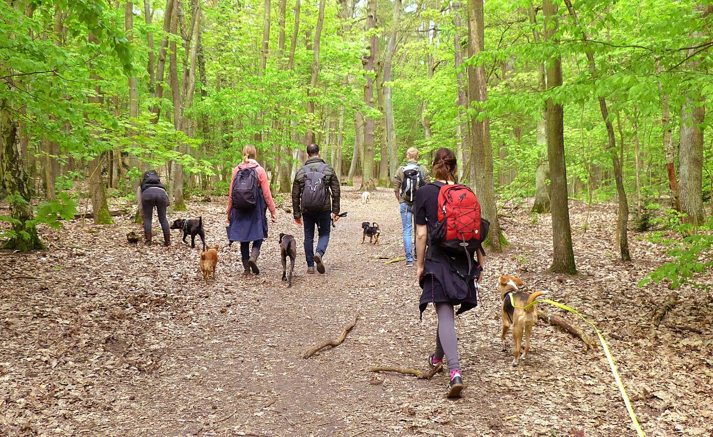 Trainings-spaziergang - Gemeinsam bei einem entspannten Spaziergang Gelerntes vertiefen, Beschäftigungtipps mitnehmen und einfach mal tief Luft holen.