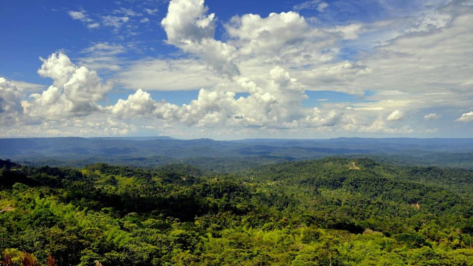 Aerial view of the Amazon forest.