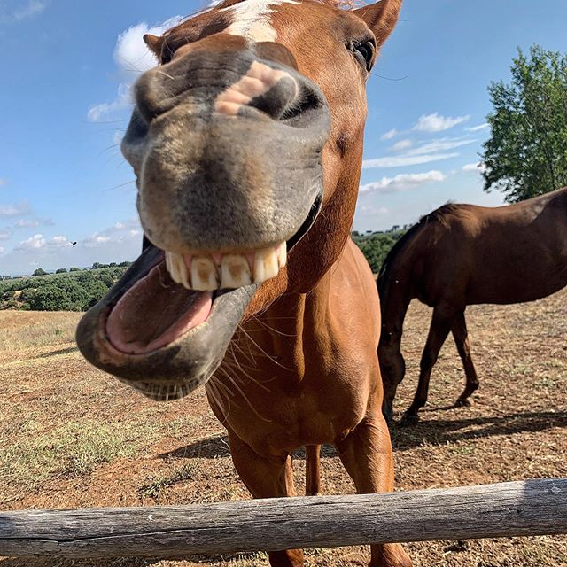 DIONI #naughty #funny #boy @tenutadipaternostro #vetralla a spiritual environment for horses #santuary #equine they run free and sometimes stop by in the middle of dinner!