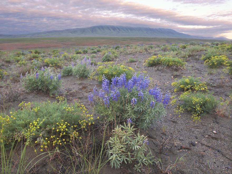 Spring Pastels Arid Lands